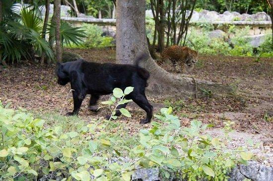 Xcaret Eco Theme Park : animaux