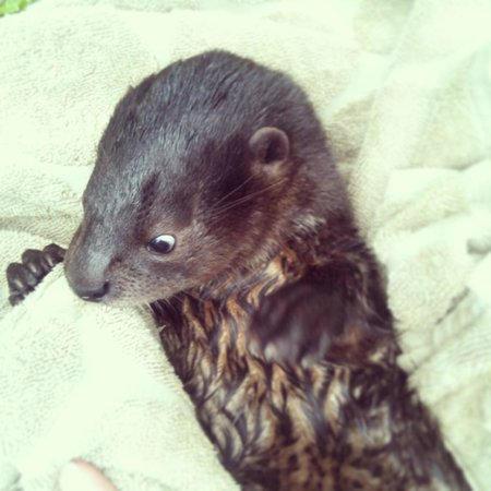 Kalizo Lodge: Ariel the Otter
