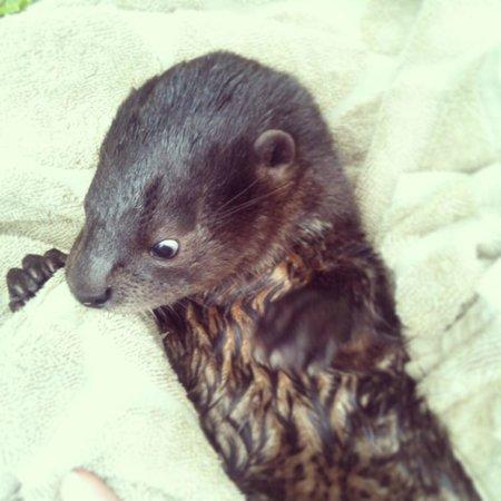 Kalizo Lodge: Ariel the Otter
