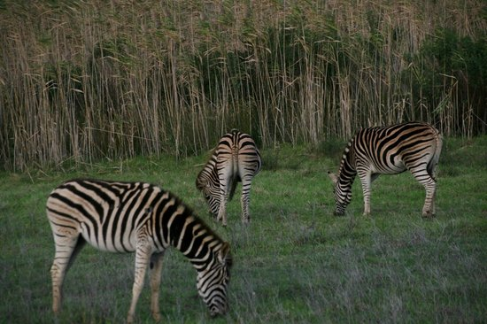 African Blue Day Tours: Garden Route Game Lodge