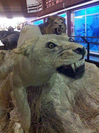 Onda, España: Animales disecados