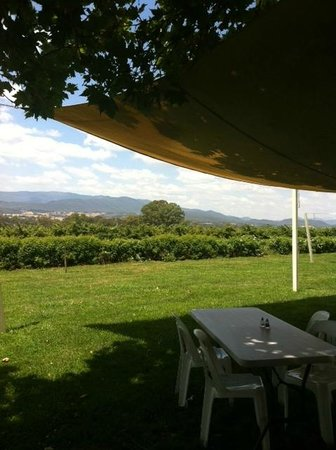 Gracebrook Wines: Outdoor dining under trees