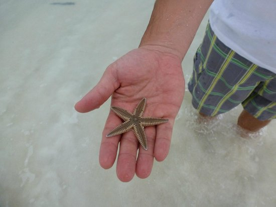 Bahama Beach Club: Starfish, turtle, so much just steps from your room!