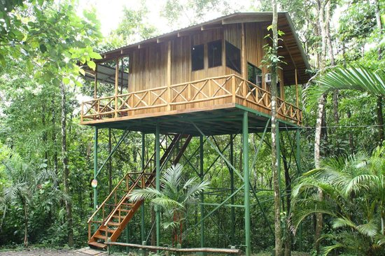 Hummingbird tree house picture of tree houses hotel for Tree house costa rica