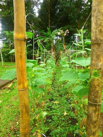 La Quinta Sarapiquí Lodge : garden