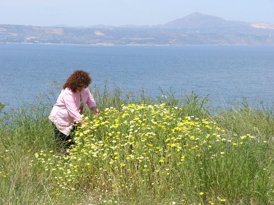 Olive Tree Cottages: Margaritas & view to the sea