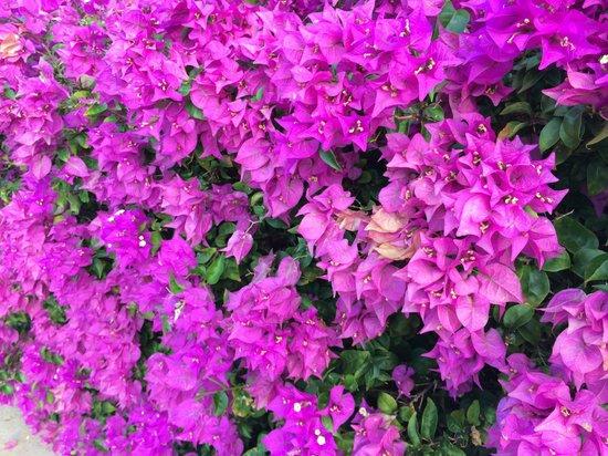 Sheraton Maui Resort & Spa : Flowers everywhere -- so gorgeous