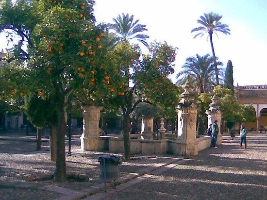 Mezquita-Catedral de Córdoba: Ripe fruit in the Court of Oranges