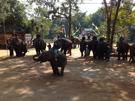 Thai Elephant Conservation Center : the show.