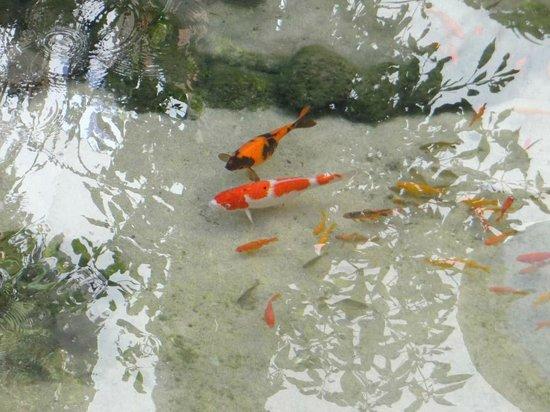 Herods Palace Hotel Eilat: Рыбки в пруду