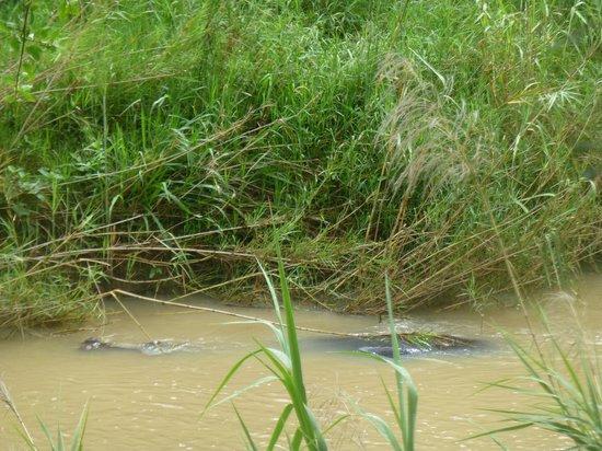 Karongwe River Lodge : L'ami rhino
