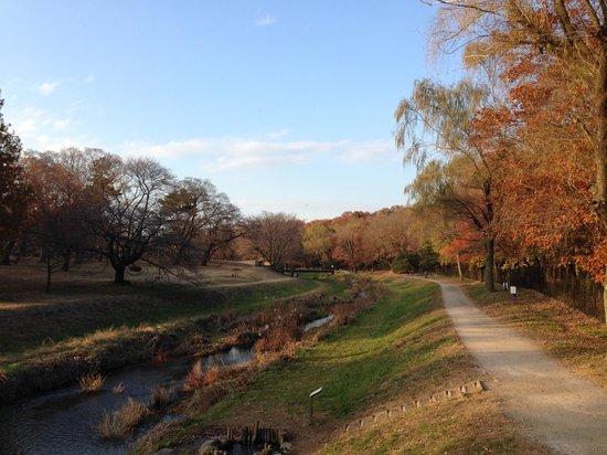 Nogawa Park : 公園