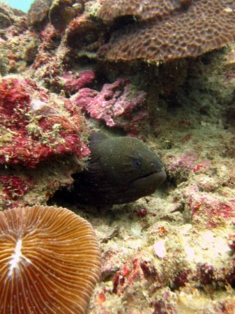 CrocoDive Phuket diving center: Great diving with Crocodive