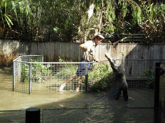 Hartley's Crocodile Adventures: Crocodile attack show