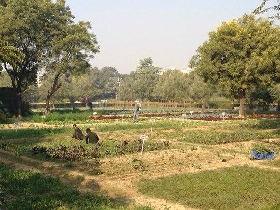 Trident, Agra: Vegetable garden