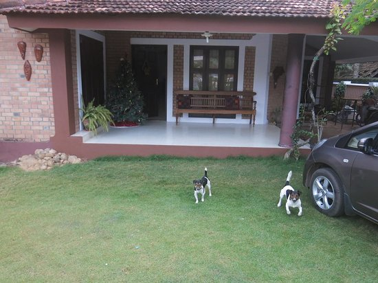 Tharavadu Homestay: Cute dogs