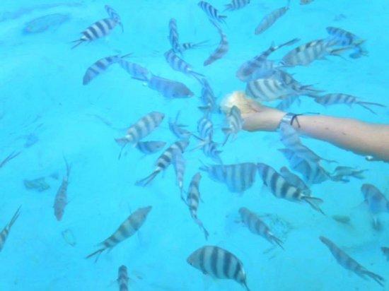 Veranda Palmar Beach: Séance snorkelling