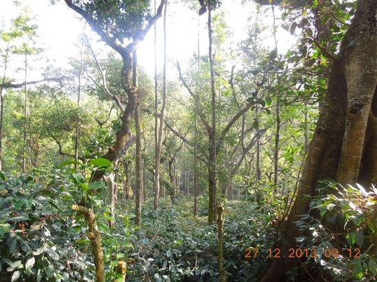Thippanahalli Homestay: A walk through the coffee estate