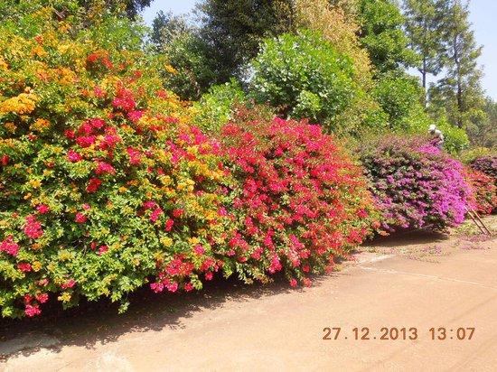 Thippanahalli Homestay: Flowery welcome... near the entrance