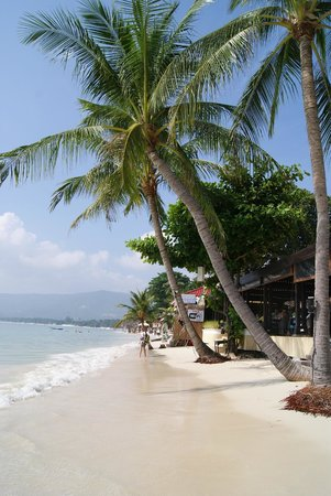 Samui Mermaid Resort: Пальмы, море, песок))))