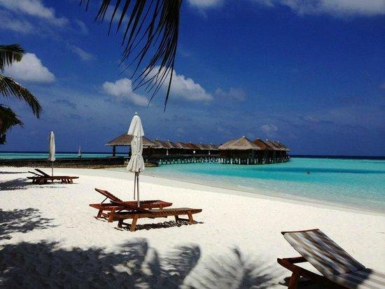 Maafushivaru: Transats sur la plage