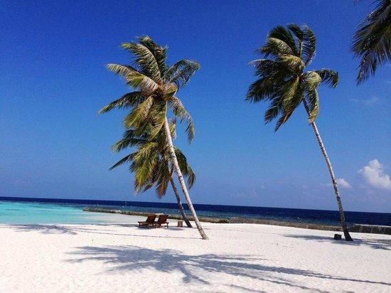 Maafushivaru: Palmiers