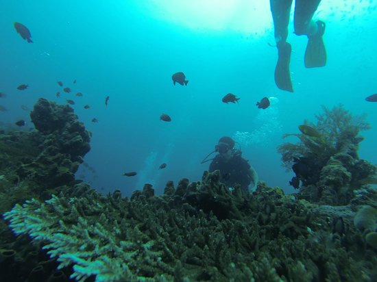 Adventure Divers Bali: Dive down to the Liberty shipwreck