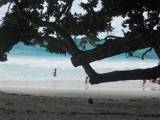 Anse Lazio: beach 5