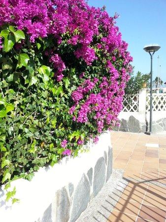 Santa Clara Bungalows: Området är otroligt vackert med buskar, blommor och fontäner.