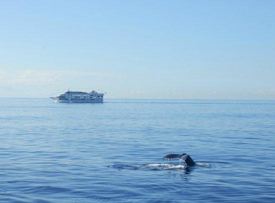 Atlantis Cruises: Whale
