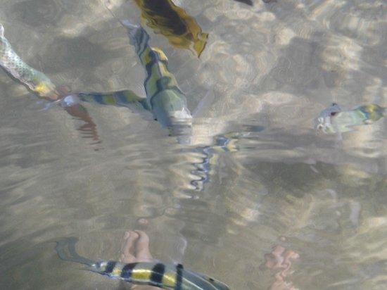 Royal Brayka Beach Resort : de vissen