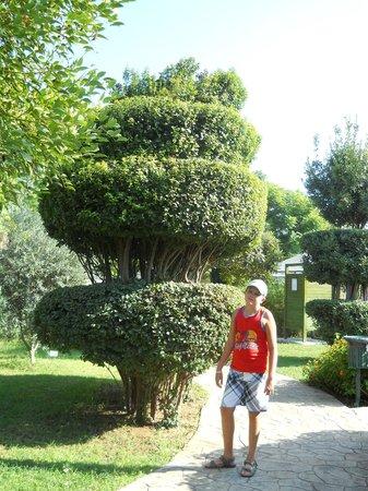 Belconti Resort Hotel: На территории отеля много разных деревьев и таких тоже. А цветов, все благоухает!