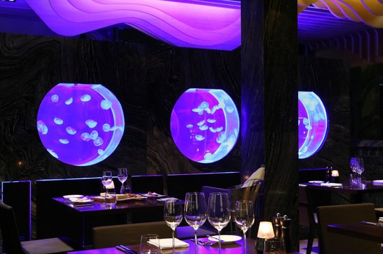 ruffino restaurant lounge jelly fish tank of underwater world concept - Underwater World Restaurant