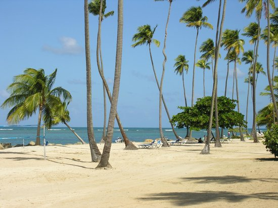 Gran Melia Golf Resort Puerto Rico : Fake Beach contains rocky and coarse sand