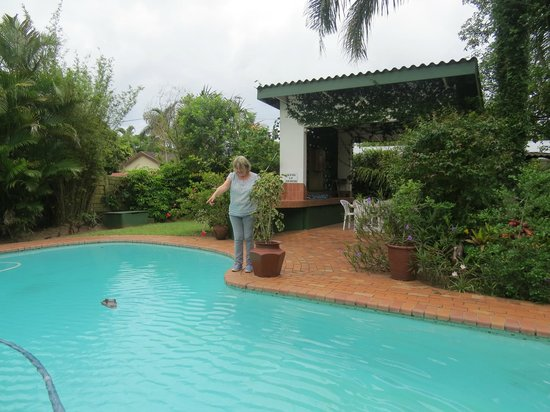 Igwalagwala Guest House: The swimming pool with toy croc.