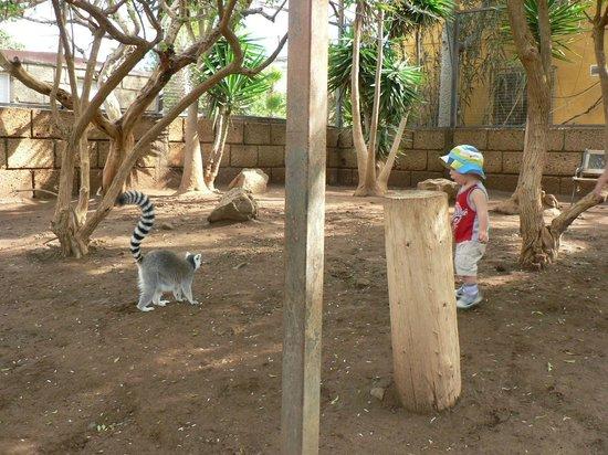 Monkey Park : мой сын Лука и лемур