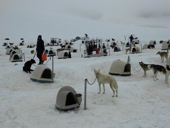 Alpine Air Alaska: Sled Dogs on Punch Bowl Glacier