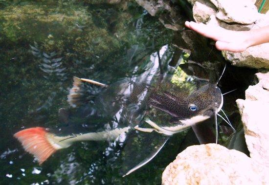 Ogrod Botaniczny w Lodzi : Wielka ryba
