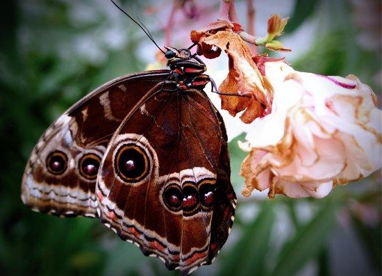 Ogrod Botaniczny w Lodzi : Motyl