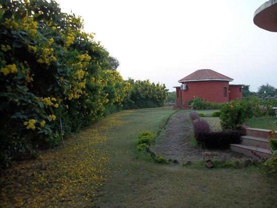 Aum Health Resort: suite cottage areas