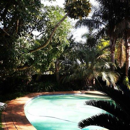 Airport Modjadji Guesthouse : tropical garden and pool