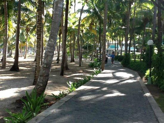 ClubHotel Riu Bachata: walkway between Hotels