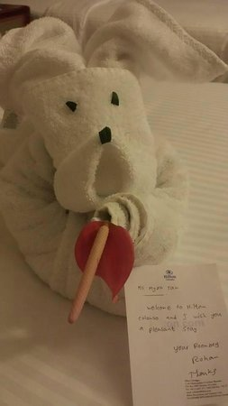 Hilton Colombo: My welcome towel animal from housekeeping