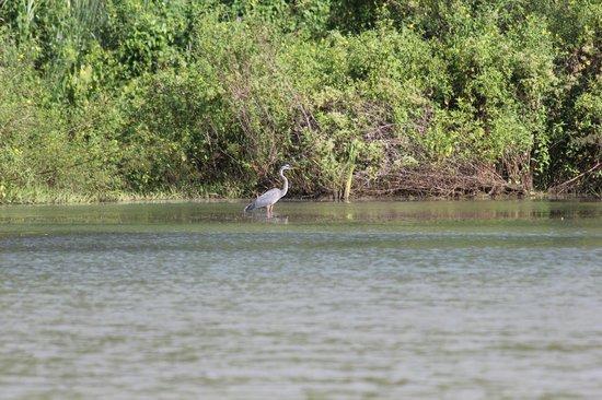 Gatun Lake: Birdwatching