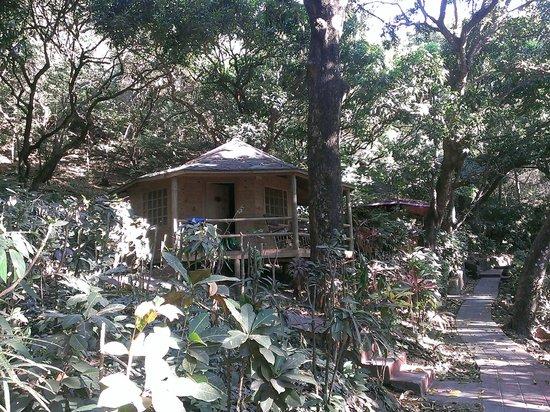 Hotel Los Mangos : It's a tropical garden