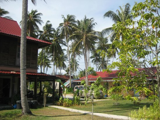 Soluna Guest House: Palm trees around the guest house