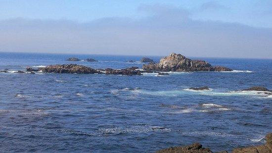 Point Lobos State Reserve : Sea Lion Island
