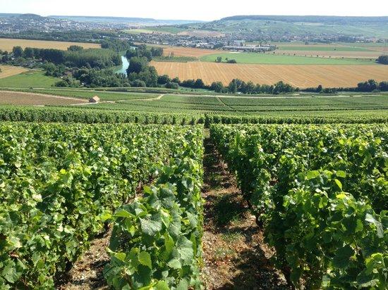 La Vigne du Roy Champagne Day Tours : The vines