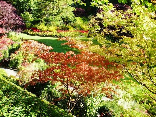 Butchart Gardens: cores em profusão