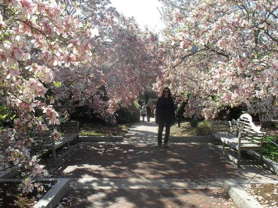 Smithsonian Institution Buidling: Jardim ao lado do Edifício do Smithsonian Institution em Abril